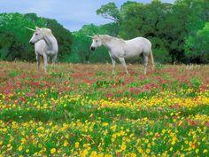 Pics Photos Hd Wallpaper Farm Animals Desktop Wallpaper Farm Animals