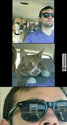 Funny Cat Memes 813814595147467432 - Just hang tight guys I know what I'm doing Source by matthieugrondin Crazy Funny Memes, Really Funny Memes, Stupid Funny Memes, Funny Relatable Memes, Funny Humor, Dark Humor Jokes, Funny School Jokes, Funny Animal Jokes, Cute Funny Animals