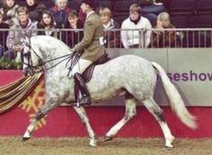 SkellornHarrison - Stallion Data