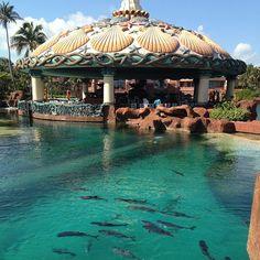Sharks at Atlantis Resort in Nassau Paradise Island, The Bahamas!