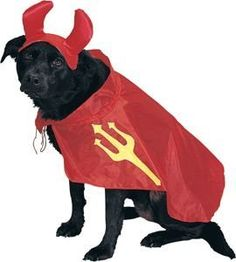 Devil Pet Halloween Costume Size Small >>> Don't get left behind, see this great dog product : Costumes for dog