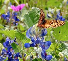 Free as a butterfly.........
