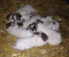 Sleeping pups. They grow so quickly. They need to rest a lot.