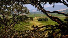 Wine Tours of Sonoma County & Sonoma Valley | Sonoma Wine Tours
