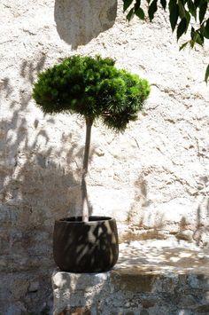 Brauner Blumentopf aus Keramik mit 32cm Durchmesser.
