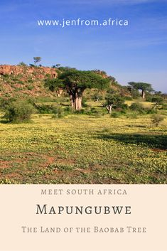 A guide to exploring Mapungubwe National Park in South Africa.   The haunting cry of a fish eagle breaks the early morning silence over the confluence of the Limpopo and Shashe Rivers in the Mapungubwe National Park, a SANParks property tucked away in a far north-western corner of South Africa.  Satisfied that all is well it settles on a baobab tree that stands guard over the confluence. Baobab Tree, North Western, Africa Travel, Early Morning, Rivers, Cry, South Africa, Exploring, Travel Inspiration