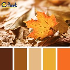 bright yellow - Tag Page 3 of 13 Color Palette Ideas Fall Color Palette, Colour Pallette, Colour Schemes, Color Combinations, Color Balance, Design Seeds, World Of Color, Warm Colors, Autumn Colours