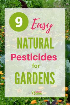 Using homemade pesticides for your garden is healthier for you and the environment than using chemicals. In this post, find 9 easy ways to make easy homemade pesticides for gardens. Pesticides For Plants, Natural Pesticides, How To Make Diy, Make It Simple, Dish Detergent, Household Cleaning Tips, Beneficial Insects, Insect Repellent, Garden Pests
