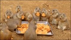 Google+ #Mahlzeit #Chips