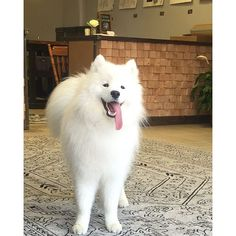 From high protein to probiotics, discover the benefits of pet-specific nutrition plans. (Photo Credit: blancothesamoyed)