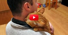 Most cats like to cuddle, but not every cat likes to give hugs like this snuggly guy.