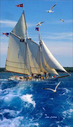 Sailboat Living, Sailboat Art, Classic Sailing, Classic Yachts, Old Sailing Ships, Full Sail, Photos Voyages, Set Sail, Tall Ships