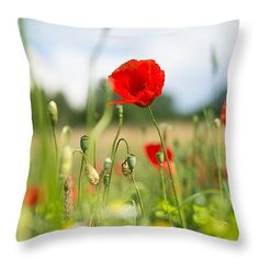 Throw pillow - Flower meadow in summer with red poppy. All throw pillows are available in multiple sizes. (c) Matthias Hauser hauserfoto.com