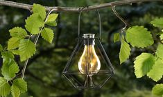 Αποτέλεσμα εικόνας για hanging plants and solar lights Hanging Plants, Solar Lights, Outdoor Lighting, Solar Lanterns, Exterior Lighting