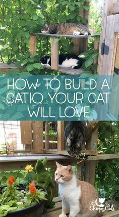 How to build a catio your cat will love,Qu'est-ce que manhattan project chatterie ? - How to build a catio your cat will love,Qu'est-ce que manhattan project chatterie ? Que signi… How to build a catio your cat will love, Outdoor Cat Enclosure, Reptile Enclosure, Diy Cat Enclosure, Cat Playground, Cat Garden, Cat Condo, Outdoor Cats, Cat Furniture, Furniture Stores