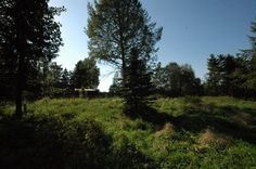 Hellebjergvej 31, 3100 Hornbæk - Kæmpe naturgrund op til det fredede Rusland #fritidshus #sommerhus #havreholm #selvsalg #boligsalg