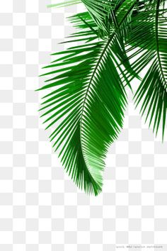 Green Palm leaves Foto de material