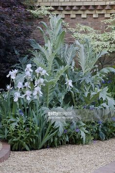 corner-of-walled-garden-cardoon-iris-sibirica-alba-and-perennial-picture-id130793085 (683×1024)
