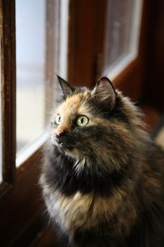 FACTOID: A 19th century issue of Popular Science reported on a cat who knew each family name. Asked to fetch someone to dinner, she would go to the correct room and meow until she got a response.