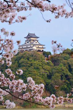 National treasure, Inuyama castle #Japan