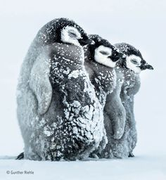 wildlife pictures choice awards 22 (1)
