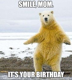 Take a look at the daily morning ridiculous funny picdump of the day 101 to entertain yourself. These 26 funny images will make your whole day joyful. Happy Birthday Mom Meme, Mom Birthday, Funny Images, Funny Pictures, Animal Pictures, Funny Animals, Cute Animals, Funny Pets, Wild Animals