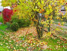 fall garden design and yard landscaping ideas