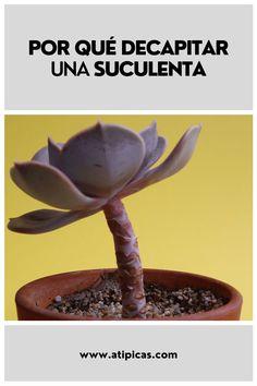Cactus Y Suculentas, Plants, Interior, Gardens, Cactus Plants, Templates, Growing Plants, Sun Plants, Propagating Succulents