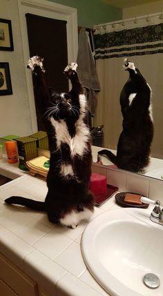 何目的?怪しいポーズで人を惑わす猫のゴールキティ