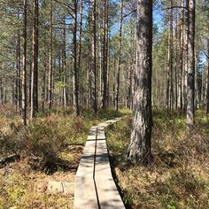 On the day like this, the only way is outdoors 🌞🌲🌱🌾 Nordic By Nature, Days Like This, The Only Way, Trekking, Sunny Days, National Parks, Hiking, Outdoors, World