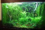 Форум аквариумистов - аквариумный форум: аквариумные рыбки, о растениях и прочие аквариумные вопросы. Aqa.ru - форум об аквариумах - форум а...