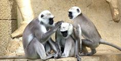 majmunaaa