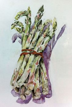 Asparagus in watercolor. Botanical Drawings, Botanical Illustration, Botanical Art, Watercolor Illustration, Watercolor Fruit, Watercolor Flowers, Watercolor Paintings, Watercolors, Veggie Art