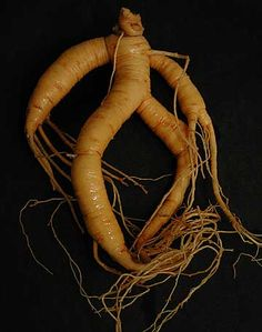 Oooh, Ginseng! That ancient root. I don't have any fresh stuff, but I have these ginseng extract pills. They'll do. *pops 2 ginseng pills into gob* Ginseng. Sounds ancient, yes, but just what is …