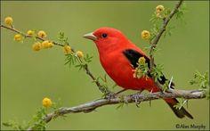 Pássaro ☺♥