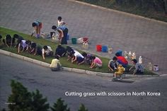 Cutting grass with scissors in North Korea - heh:-)
