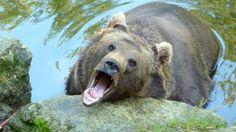 Und dann schaute ich dem Bär ins Auge