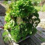 Ein ganzes Stück Garten auf der Terrasse oder dem Balkon! KUBI Edelstahlhochbeet mit integriertem Wasserspeicher und Komposter. 10 Jahre Erfahrung! Der KUBI ist ein perfekt abgestimmtes Anbausystem aus Erdvolumen, Bewässerung und Kompostierung. Platz für 51 Pflanzen in größtmöglicher Vielfalt, und das platzsparend auf nur 1m². Mit unserem Support auch für Anfänger geeignet. #KUBI #vertikal #vertical #hochbeet #edelstahl #rollen #kompost #wasser #garten #terrasse #balkon #urban #garden…