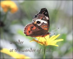 butterfly photography  butterfly picture by MicheleMPhotography