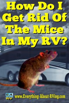 How Do I Get Rid Of The Mice In My RV? Hello, I am a very discouraged Dakota Hybrid owner. I purchased my trailer 2 years ago and experienced ongoing problems with leaks in the bed ends resulting Rv Hacks, Camping Hacks, Camping Ideas, Camping Stuff, Camping Supplies, Life Hacks, Rv Campers, Happy Campers, Diy Camper