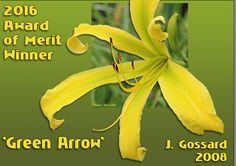 Daylilies: The American Hemerocallis Society Home Page Green Arrow, Day Lilies, American