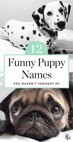 Here are 12 funny puppy names you haven't thought of. #puppies #puppynames #puppy