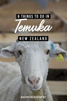 6 Fun Things to Do in Temuka - NZ Pocket Guide New Zealand Travel Guide Canterbury, Stuff To Do, Things To Do, New Zealand Travel Guide, South Island, Travel Around, Highway 1, News, Farming