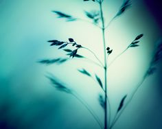 Turquoise Photography  dark teal aqua blue wall by CarolynCochrane, $30.00