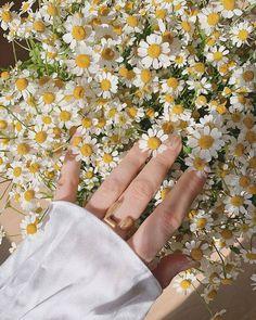 Nature Aesthetic, Beige Aesthetic, Flower Aesthetic, Aesthetic Photo, Aesthetic Girl, Aesthetic Pictures, My Flower, Flower Power, Mellow Yellow
