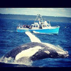 Whales in Nova Scotia