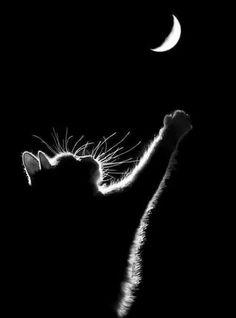 La luna e il gatto