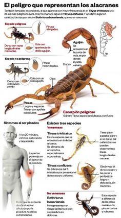 The Most Common Types of Scorpions in Arizona scorpions