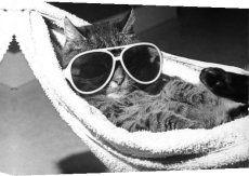 Cat with sunglasses in hammock