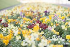 Spring at Jardin du Luxembourg by Georgianna Lane
